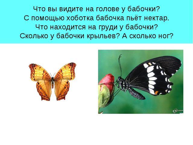 Что вы видите на голове у бабочки? С помощью хоботка бабочка пьёт нектар. Что...