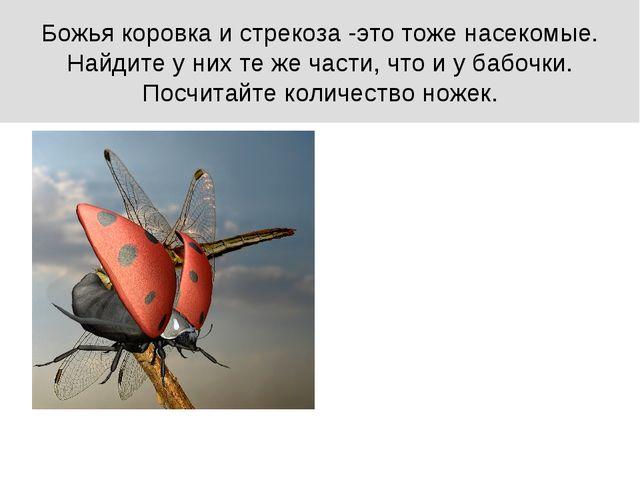 Божья коровка и стрекоза -это тоже насекомые. Найдите у них те же части, что...