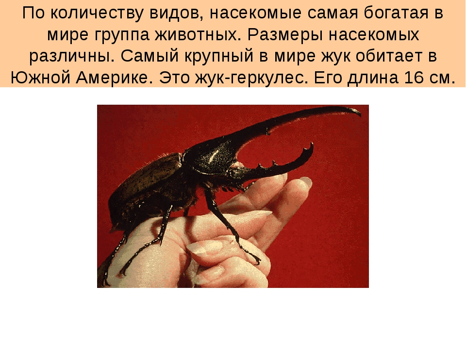 По количеству видов, насекомые самая богатая в мире группа животных. Размеры...