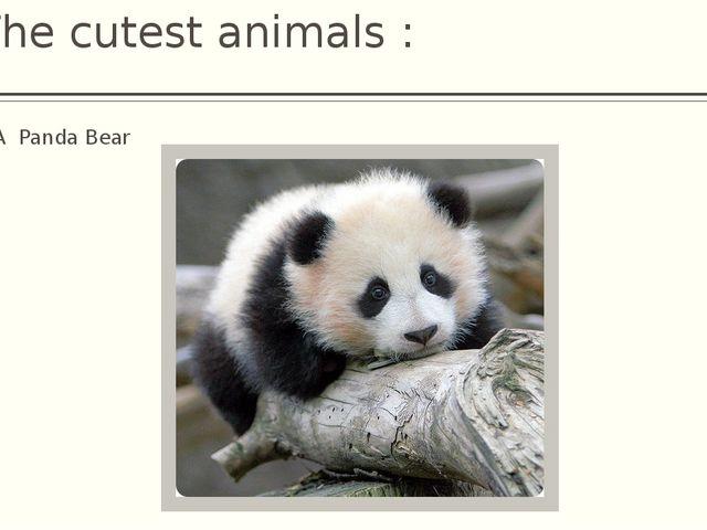The cutest animals : A Panda Bear