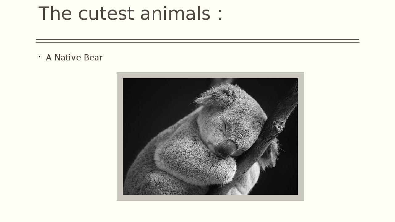 The cutest animals : A Native Bear