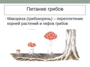 Питание грибов Микориза (грибокорень) – переплетение корней растений и гифов