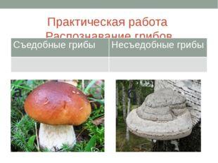 Практическая работа Распознавание грибов а б Съедобные грибы Несъедобные грибы