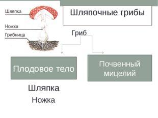 Шляпочные грибы Гриб Плодовое тело Почвенный мицелий Шляпка Ножка