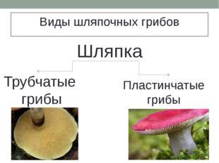 Виды шляпочных грибов Шляпка Трубчатые грибы Пластинчатые грибы
