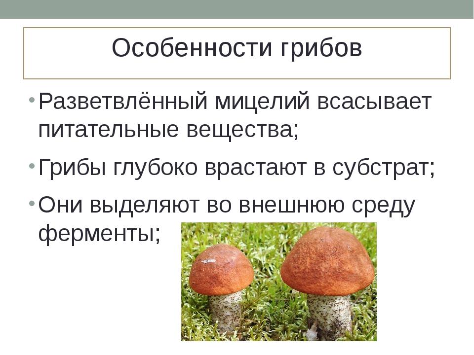 Особенности грибов Разветвлённый мицелий всасывает питательные вещества; Гриб...