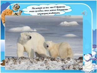 Несмотря на то, что в Арктике очень холодно, там можно встретить некоторых ж