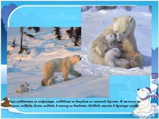 Пока медвежата не подрастут, медведица не выходит из снежной берлоги. В отлич
