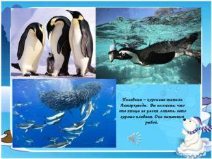 Пингвины – коренные жители Антарктиды. Вы помните, что эта птица не умеет лет