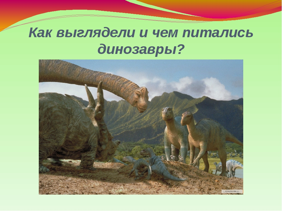 Как выглядели и чем питались динозавры?