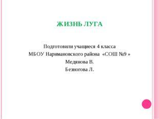 ЖИЗНЬ ЛУГА Подготовили учащиеся 4 класса МБОУ Наримановского района «СОШ №9 »