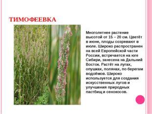 ТИМОФЕЕВКА Многолетнее растение высотой от 15 – 20 см. Цветёт в июне, плоды с