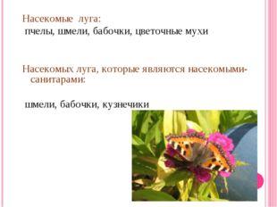 Насекомые луга: пчелы, шмели, бабочки, цветочные мухи Насекомых луга, которые
