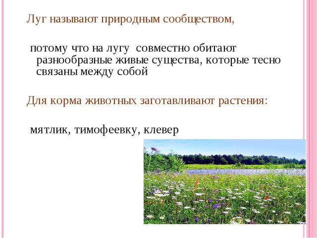 Луг называют природным сообществом, потому что на лугу совместно обитают разн...