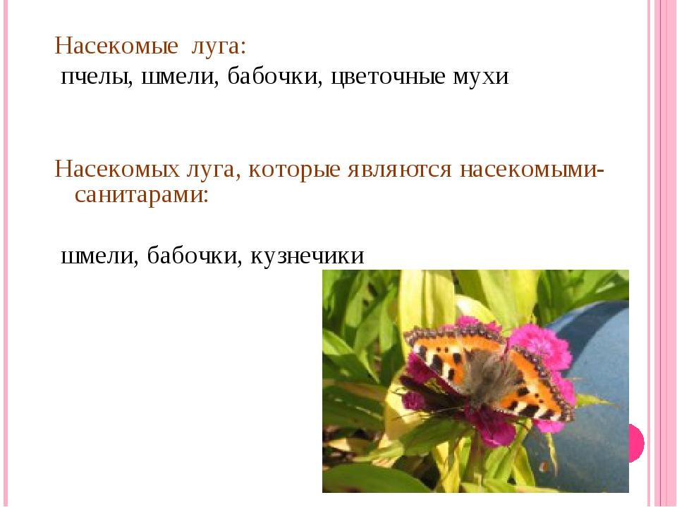 Насекомые луга: пчелы, шмели, бабочки, цветочные мухи Насекомых луга, которые...