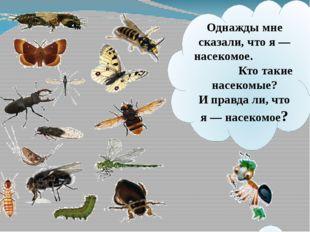 Однажды мне сказали, что я— насекомое. Кто такие насекомые? Иправдали, что