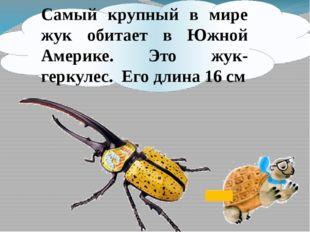 Самый крупный в мире жук обитает в Южной Америке. Это жук-геркулес. Его длина