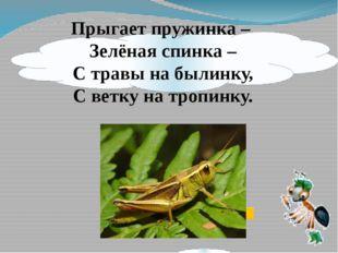 Прыгает пружинка – Зелёная спинка – С травы на былинку, С ветку на тропинку.