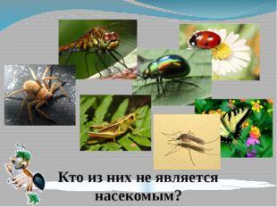 Кто из них не является насекомым?