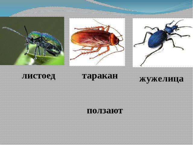 листоед таракан жужелица ползают
