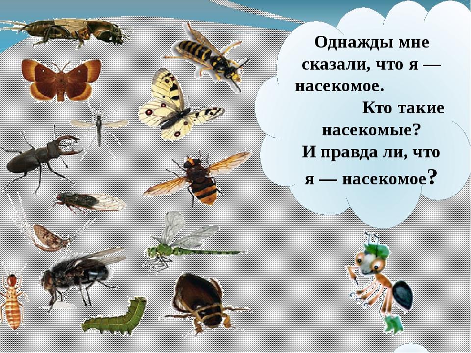 Однажды мне сказали, что я— насекомое. Кто такие насекомые? Иправдали, что...