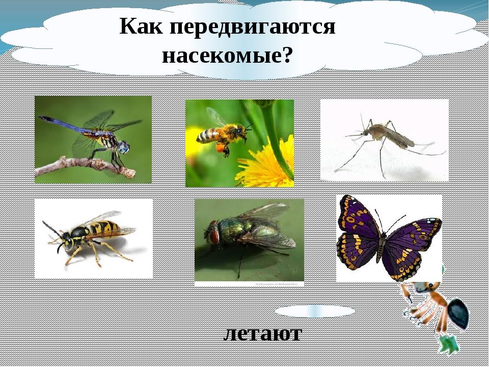 Как передвигаются насекомые? летают