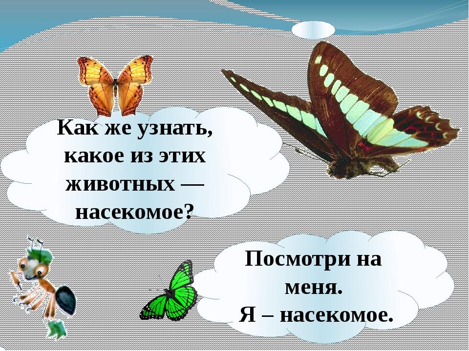 Какже узнать, какое изэтих животных— насекомое? Посмотри на меня. Я – насе...