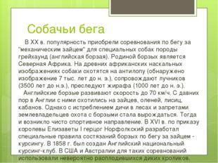 """Собачьи бега В ХХ в. популярность приобрели соревнования по бегу за """"механич"""