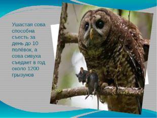 Ушастая сова способна съесть за день до 10 полёвок, а сова сивуха съедает в г