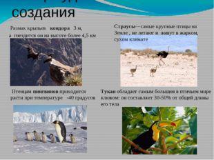 Птицы-удивительные создания Размах крыльев кондора 3 м, а гнездится он на вы