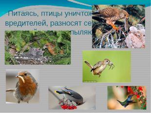 Питаясь, птицы уничтожают вредителей, разносят семена растений и даже опыляю