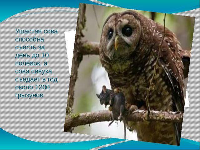 Ушастая сова способна съесть за день до 10 полёвок, а сова сивуха съедает в г...