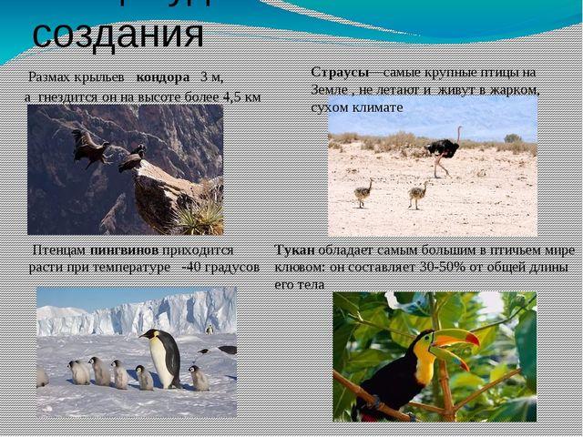 Птицы-удивительные создания Размах крыльев кондора 3 м, а гнездится он на вы...