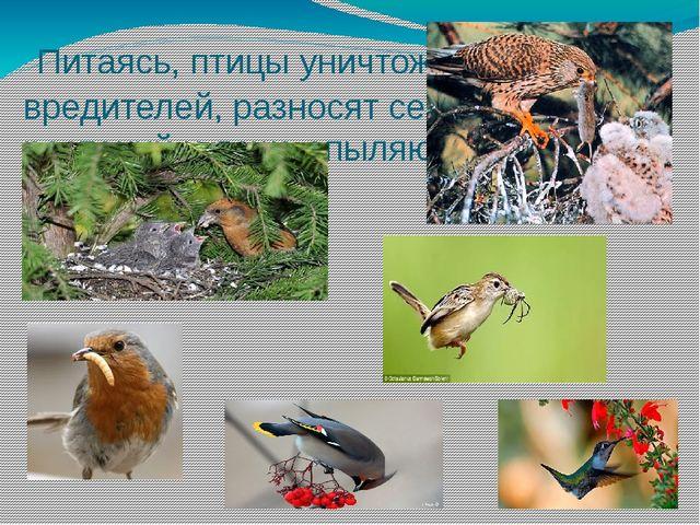 Питаясь, птицы уничтожают вредителей, разносят семена растений и даже опыляю...
