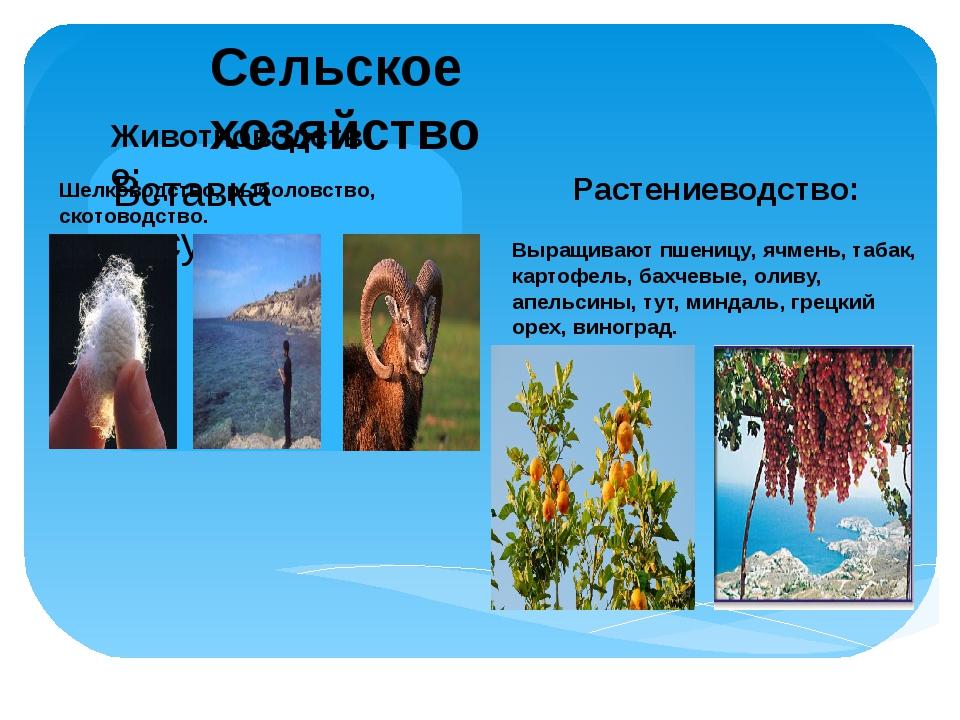 Сельское хозяйство Животноводство: Растениеводство: Шелководство, рыболовство...
