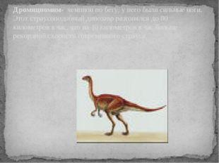 Дромициомим- чемпион по бегу, у него были сильные ноги. Этот страусоподобный
