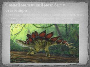Самый маленький мозг был у стегозавра. У этого растительноядного динозавра дл