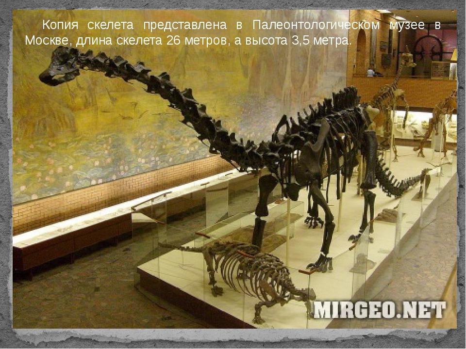 Копия скелета представлена в Палеонтологическом музее в Москве, длина скелет...