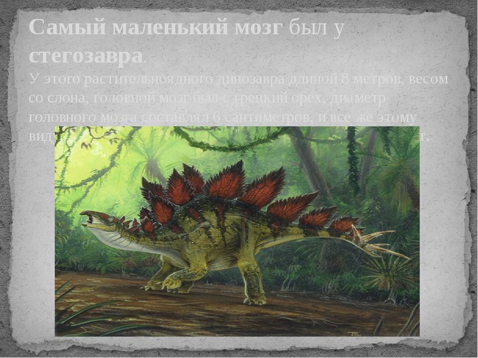 Самый маленький мозг был у стегозавра. У этого растительноядного динозавра дл...