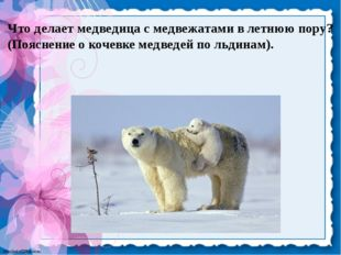 Что делает медведица с медвежатами в летнюю пору? (Пояснение о кочевке медвед