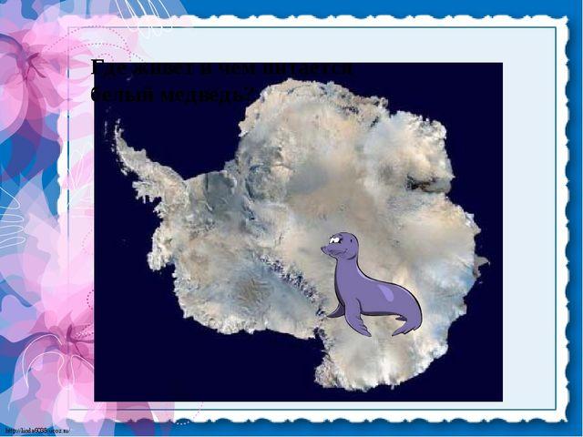 Где живет и чем питается белый медведь? http://linda6035.ucoz.ru/