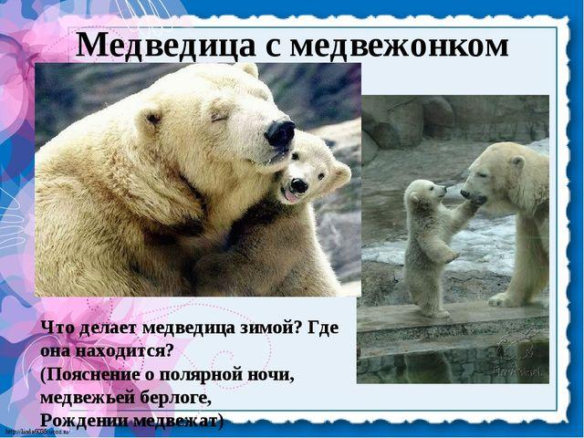 Медведица с медвежонком Что делает медведица зимой? Где она находится? (Поясн...