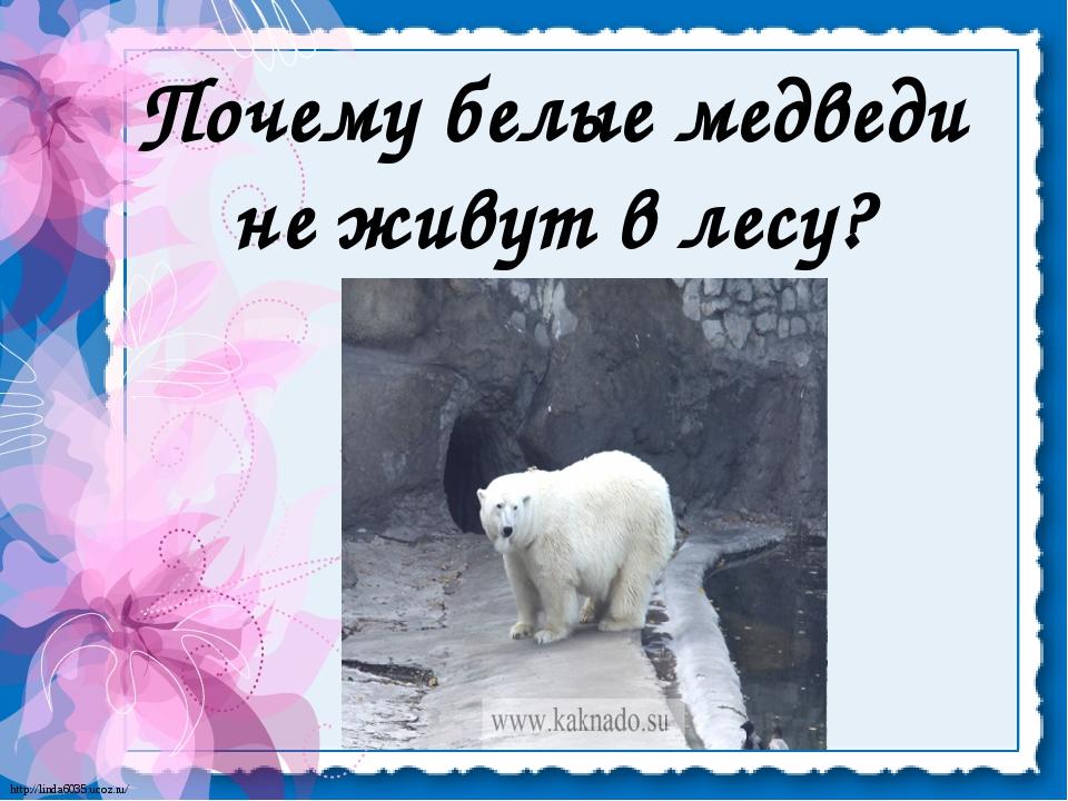 Почему белые медведи не живут в лесу? http://linda6035.ucoz.ru/