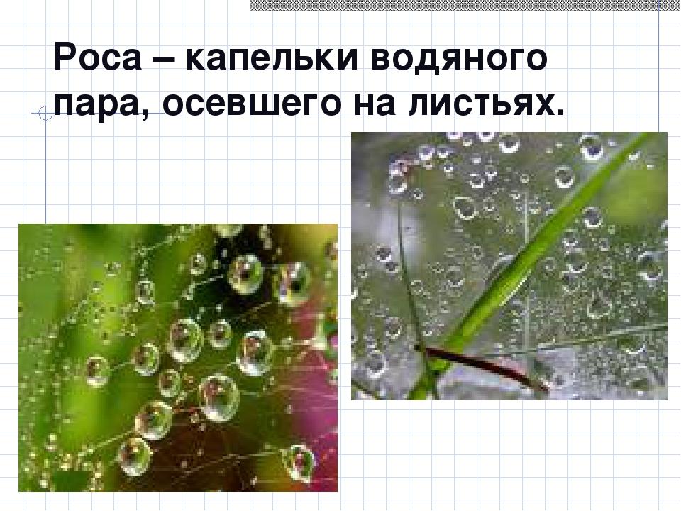 Роса – капельки водяного пара, осевшего на листьях.