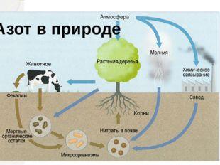 Азот в природе