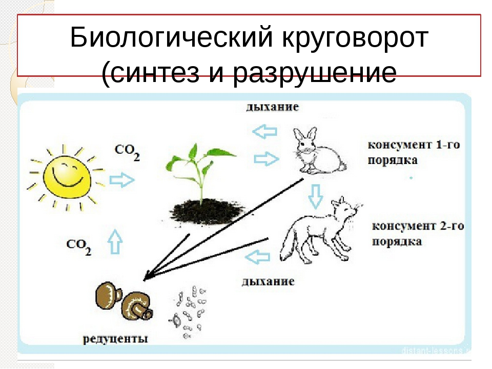 Биологический круговорот (синтез и разрушение органических веществ)