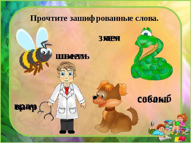 Прочтите зашифрованные слова. шьелм сакоыб вачр зяем шмель змея врач собака