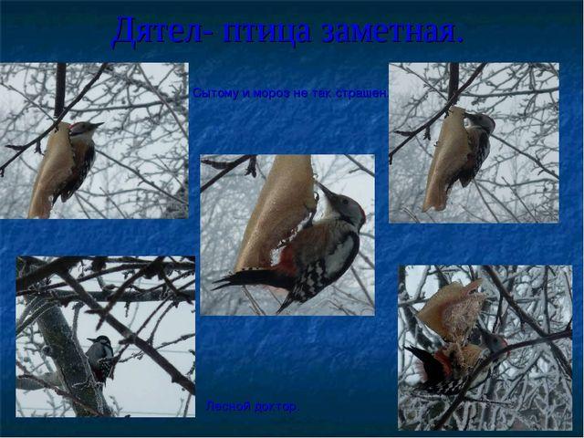 Дятел- птица заметная. Сытому и мороз не так страшен. Лесной доктор.