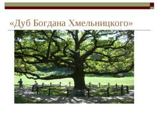 «Дуб Богдана Хмельницкого»
