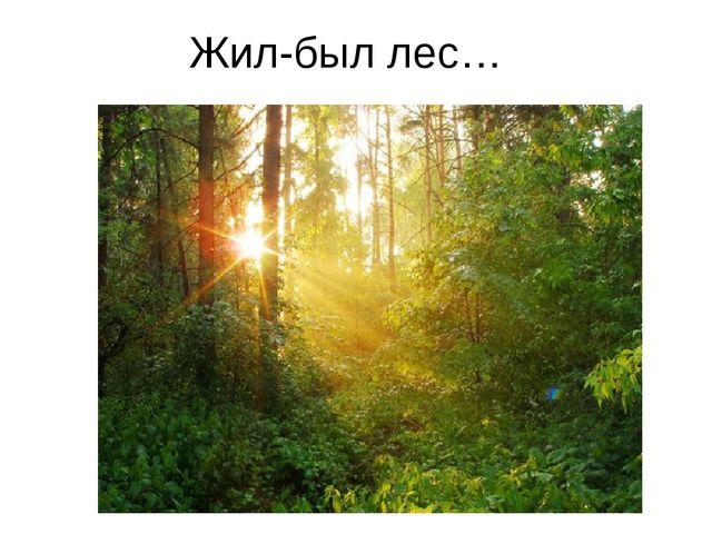 Жил-был лес…